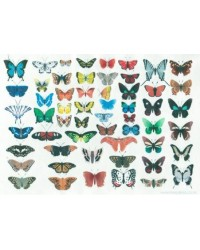 image: Wafer paper sheet Butterfly collection