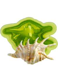 Marvelous molds Seashell silicone mould Lambis shell