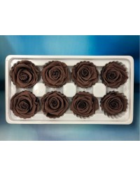 PRESERVED FLOWERS CLASSIC ROSE VINTAGE Chocolate