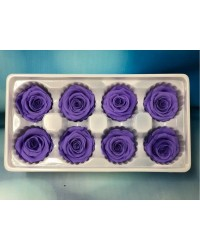 PRESERVED FLOWERS CLASSIC ROSE Purple