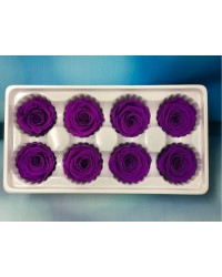 PRESERVED FLOWERS CLASSIC ROSE Electric Purple