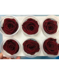 Large PRESERVED FLOWERS CLASSIC ROSE Deep Red