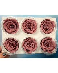 Large PRESERVED FLOWERS CLASSIC ROSE Vintage Pink