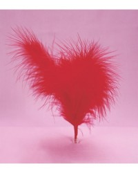 image: Red feathers (6)